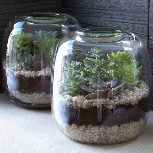 how to  patched terrarium